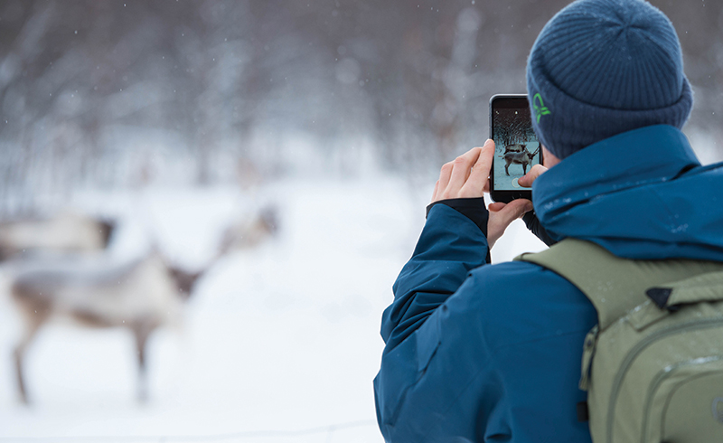 tobi tritcher taking photo of reindeer with his phone in tamok